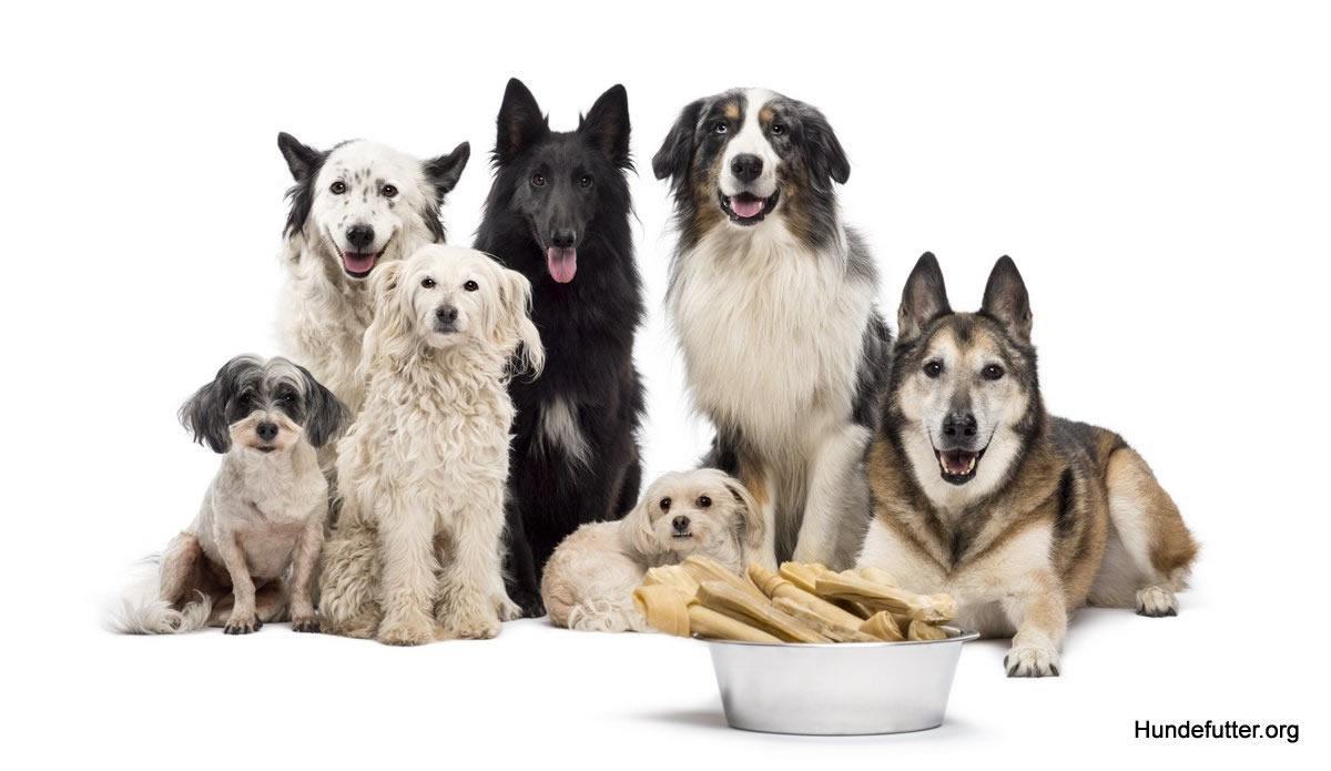 Hundefutter in Eching - 🥇 Tiernahrung Shop: Tierfutter, Katzenfutter, Barf, Hundernahrung, bestes Futter / Tockenfutter für Hunde und Welpen